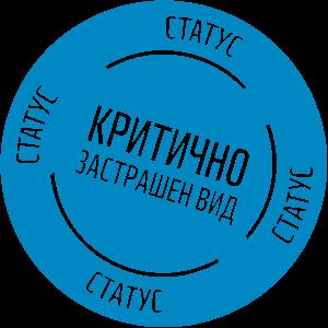 critically 2 300x300 - Пъструга