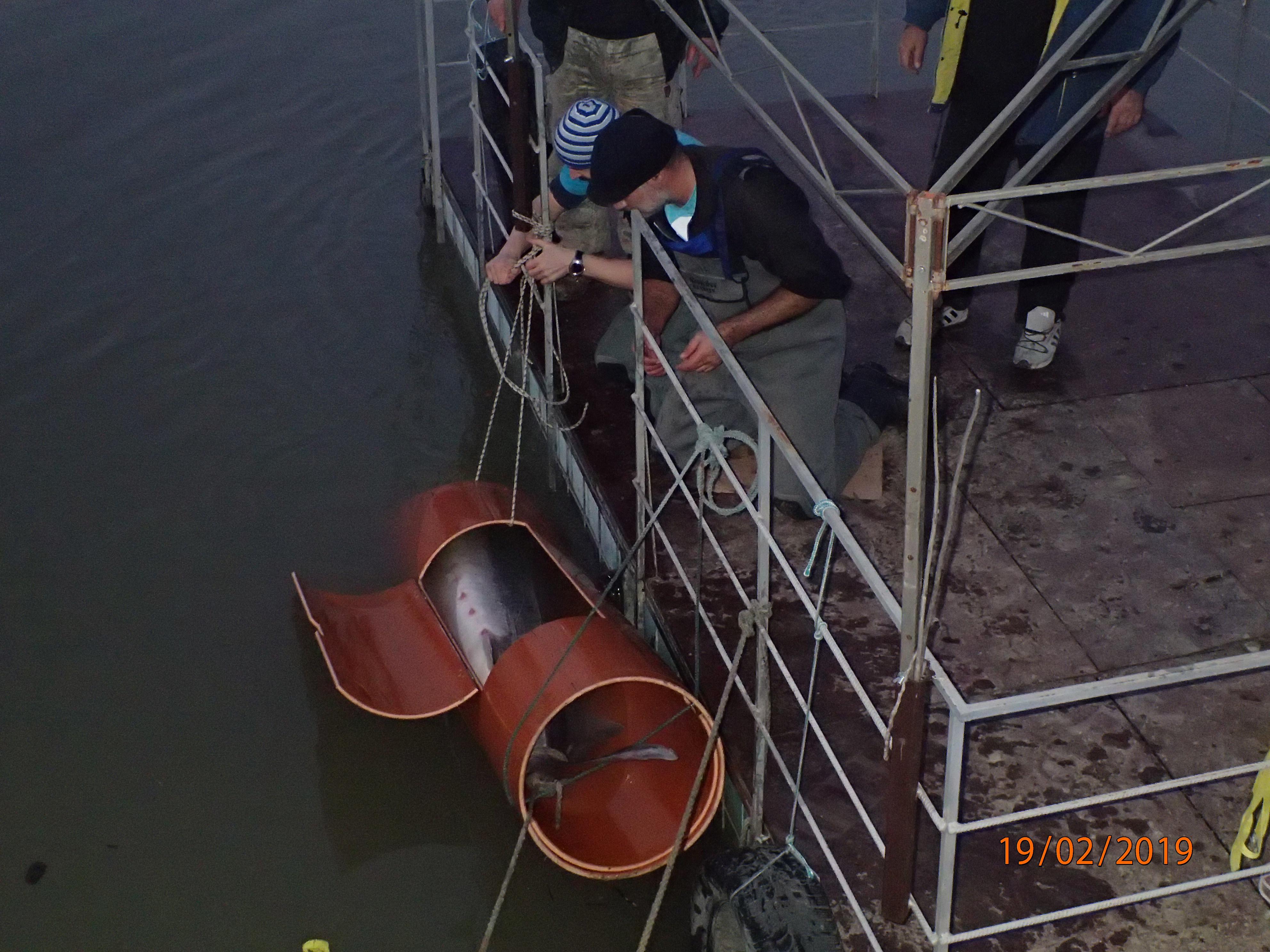 200-килограмова моруна е спасена в Дунав край Силистра