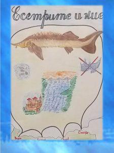 Poster Iva 2 225x300 - Конкурс за есетров постер стимулира въображението на десетки ученици