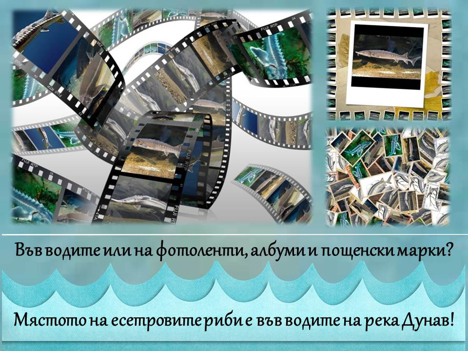 Конкурс за есетров постер стимулира въображението на десетки ученици
